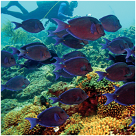 Coral Reef Restoration/CoralReefRestorationSm02.png