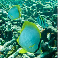 Coral Reef Science & Monitoring/CoralReefScience&MonitoringSm01.png