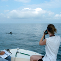 Dolphin Research/DolphinResearchSm01.png
