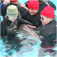Dolphin Research/DolphinResearchSm02.png