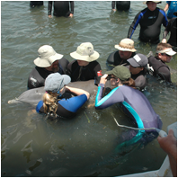 Dolphin Research/DolphinResearchSm03.png