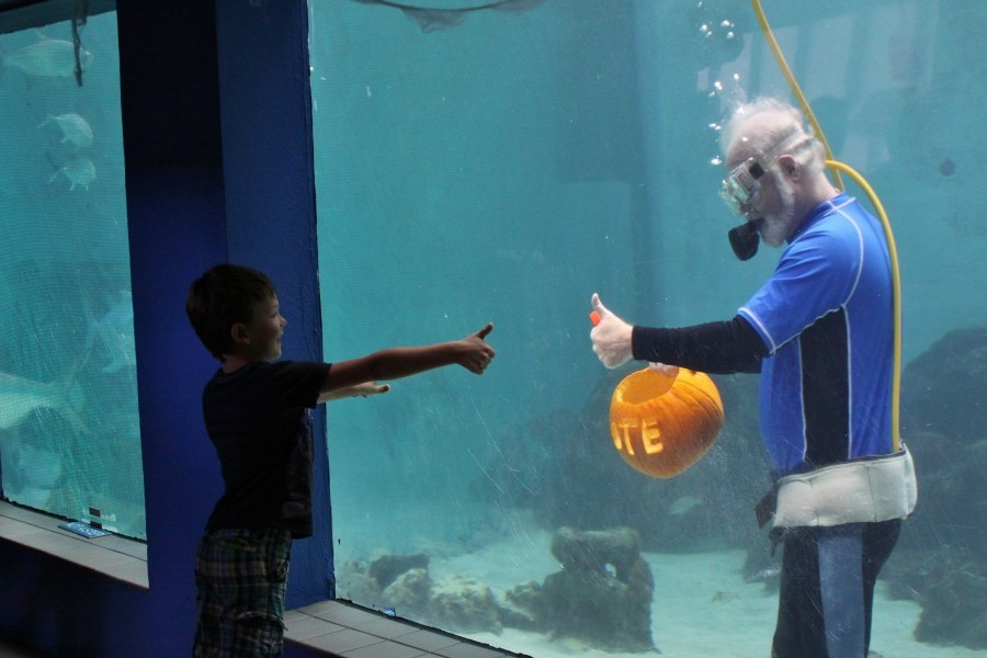 Mote President Carves Pumpkin Underwater to Prepare for Mote's Night of Fish, Fun & Fright