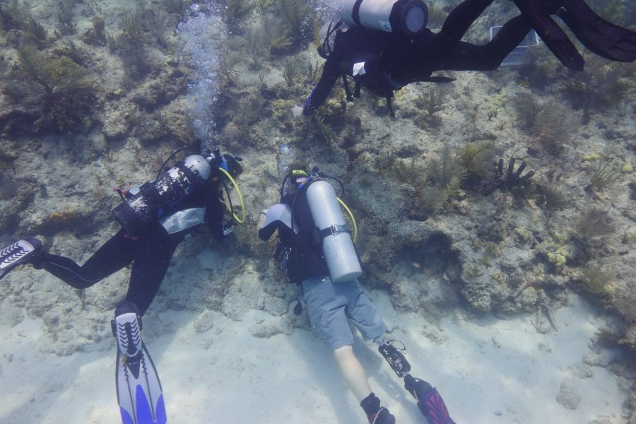 Mission to Restore Keys Coral Reef a Success