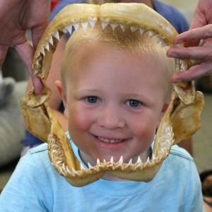 Shark kid