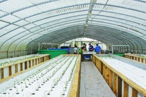 Aquaponic Fish & Veggies Worth Their Salt