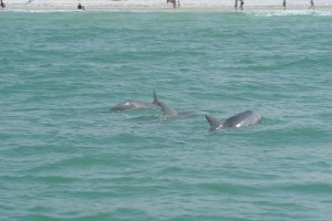 Dolphin Death is a Reminder to Protect Marine Life