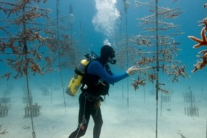 Coral Reef Monitoring and Assessment