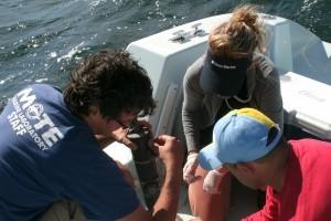 Phytoplankton Ecology