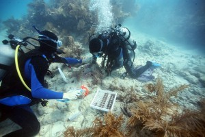 Mote Coral Research Featured in New York Times