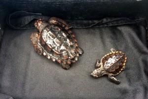 Sarasota Police Help Mote Release Sea Turtle Hatchlings