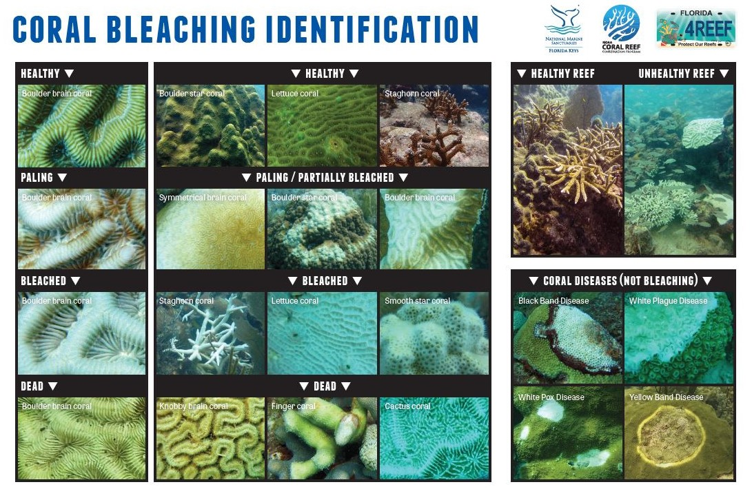 Bleaching examples and link to guide