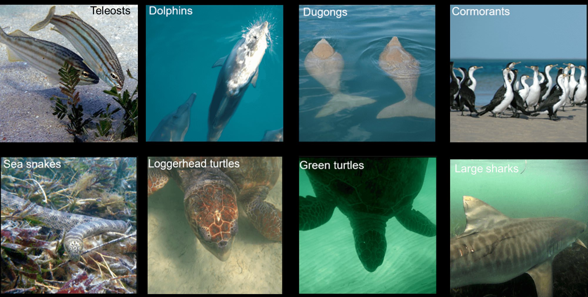 Animals documented by the Project