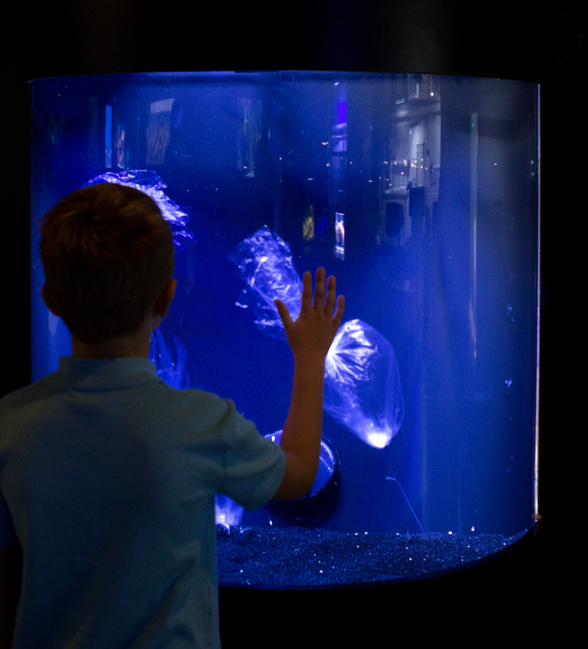 Sarasota resident, Tripp Isaacson takes a closer look at plastic bags displayed as sea jellies. Turtles and other marine life that eat jellies have a hard time spotting the difference between bags likes these and their food source. Photo credit: Conor Goulding/Mote Marine Laboratory