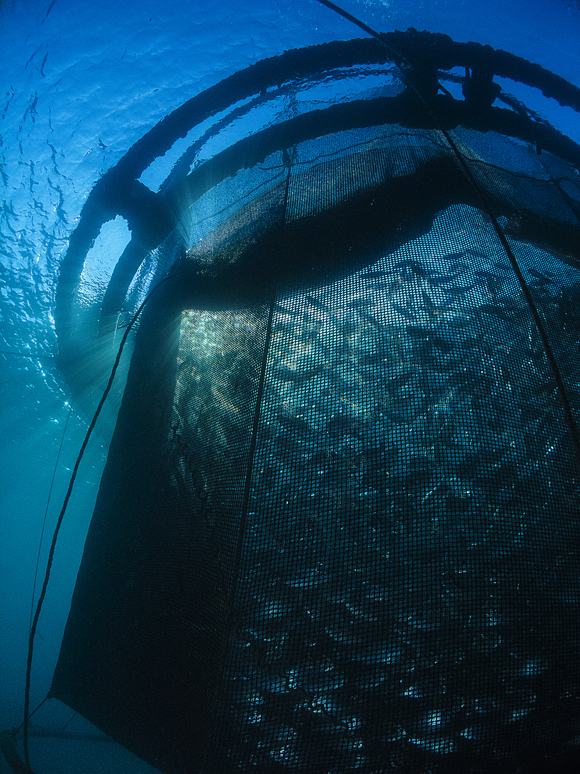 Moving U S  Marine Aquaculture Forward: The Gulf Aquaculture