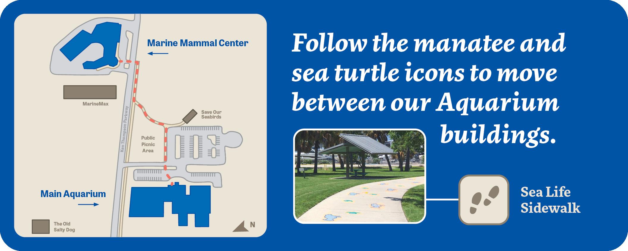 Use the Sea Life Sidewalk to navigate between Mote Aquarium buildings.