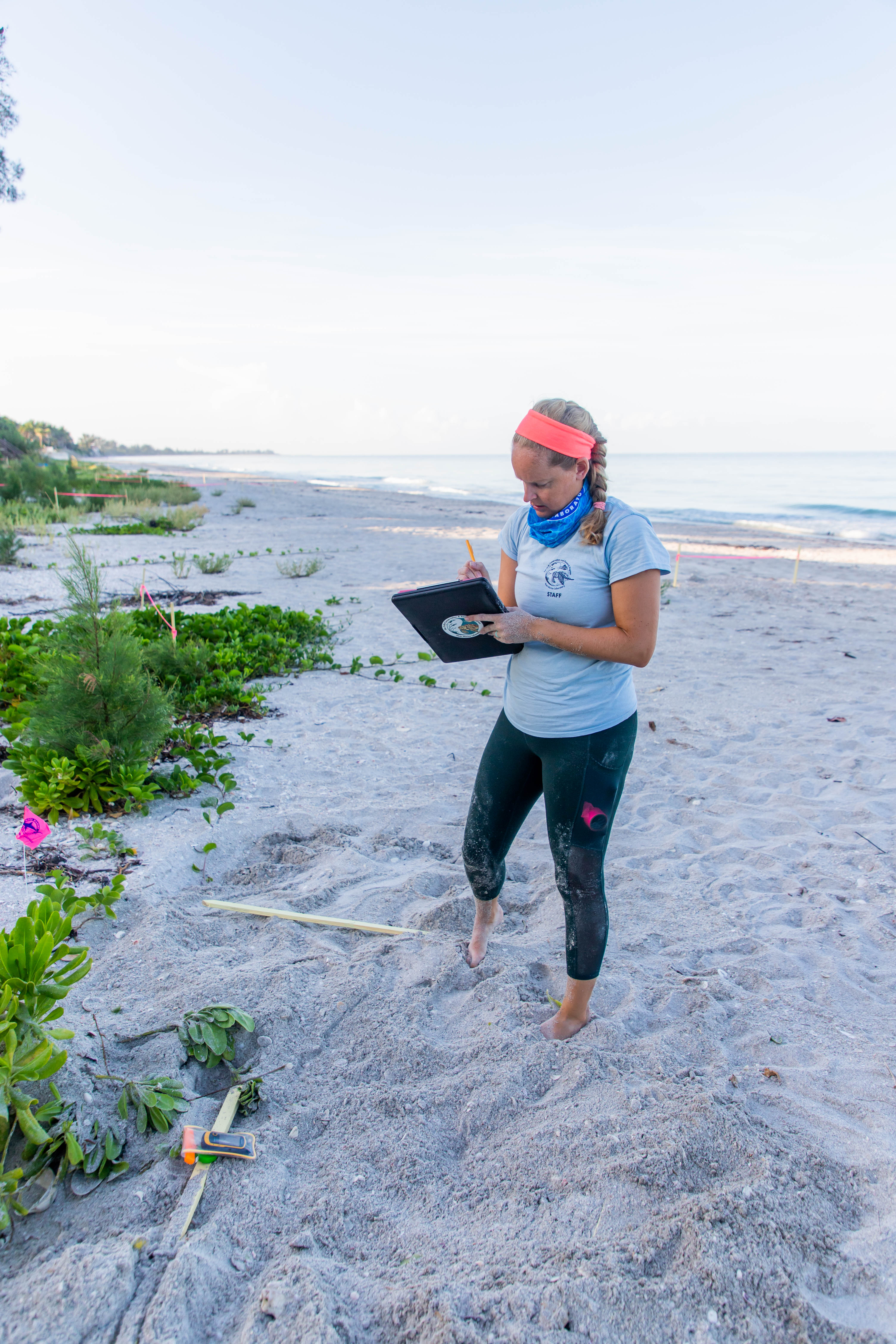 Mote biologist on the beach documents a sea turtle nest on her clipboard.