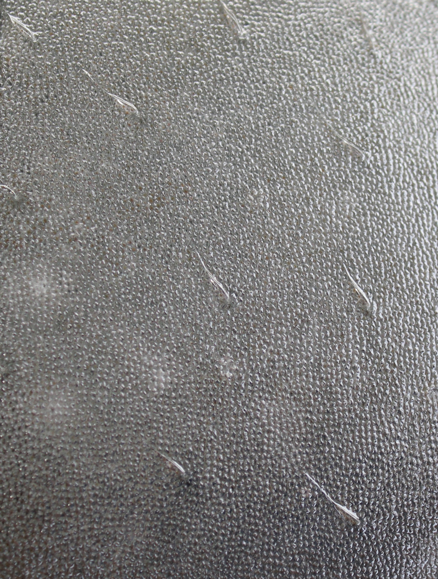 Manatee sensory hairs called vibrissae. Credit Pittsburgh Zoo & PPG Aquarium