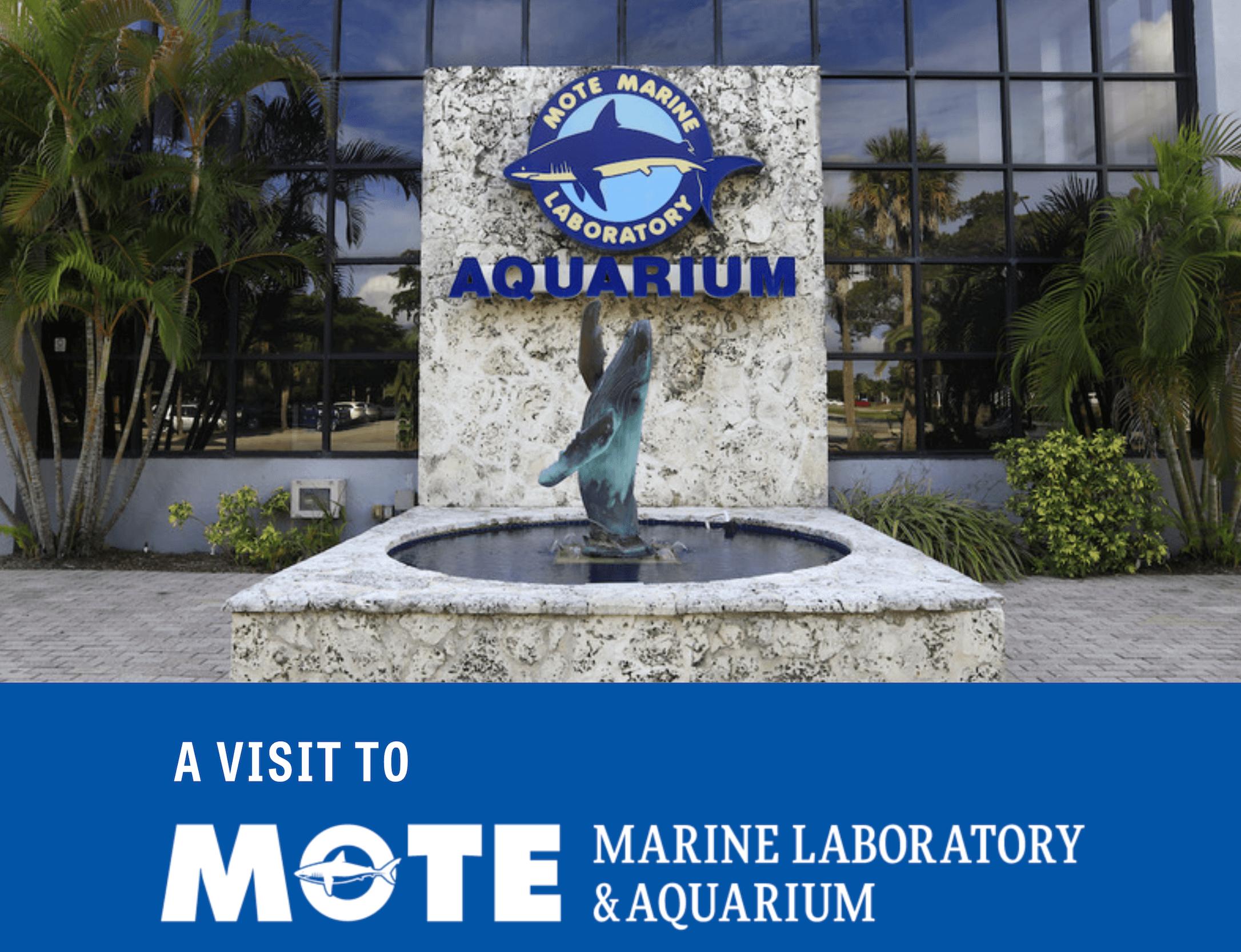 Mote Aquarium's Sensory Guide