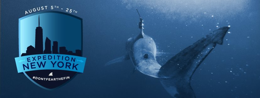 Expedition new york learning more about white shark nurseries mote marine laboratory scientists have joined the latest ocearch expedition to study great white sharks off new york with the hope of encountering juvenile publicscrutiny Gallery
