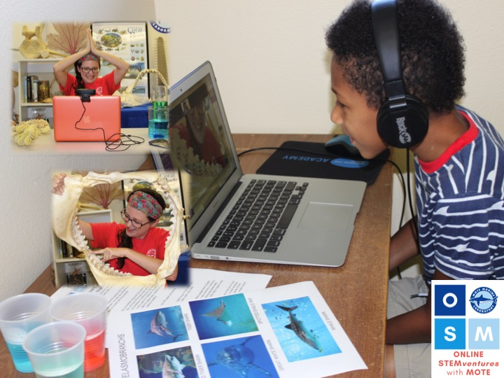 A child sits at a computer, smiling, they have a paper with shark pictures next to them. There is an image of a woman with a shark jaw and a picture of her making a shark fin over her head, to show what the child is looking at on his computer.