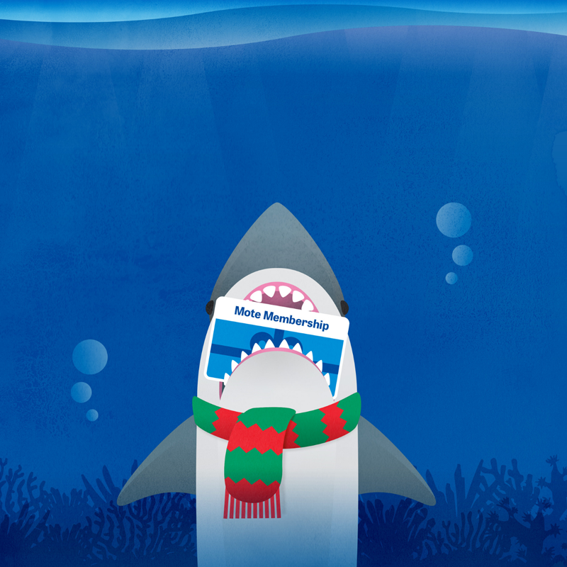 Graphic of Mote Mascot Gilly the Shark wearing a scarf and holding a Mote Membership card in his jaws