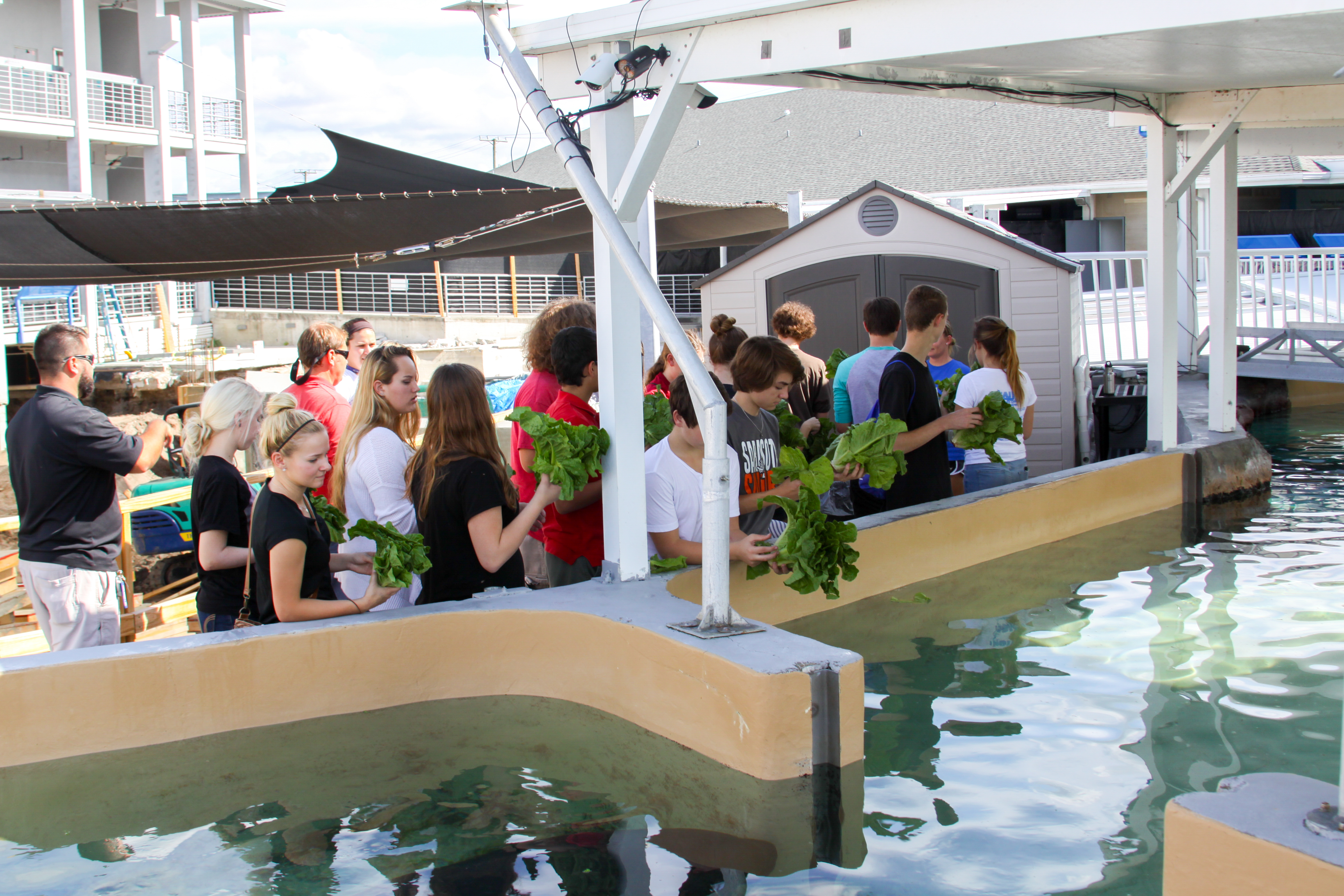 Students From Sarasota High School Visited Mote Marine Laboratory And Aquarium Tuesday Dec 1 To Deliver Freshly Grown Lettuce Their Garden