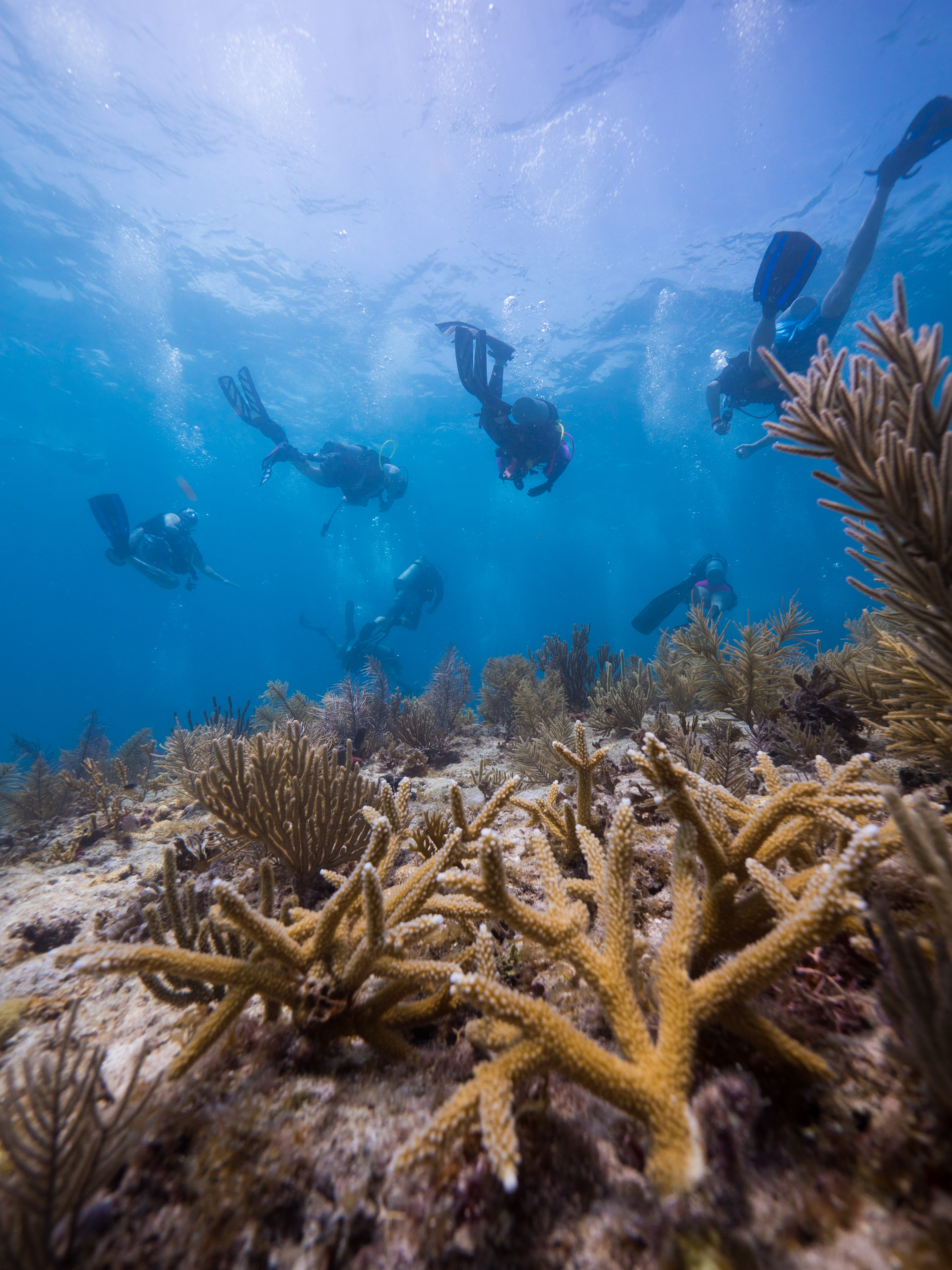initiative to restore one million corals launches in the caribbean