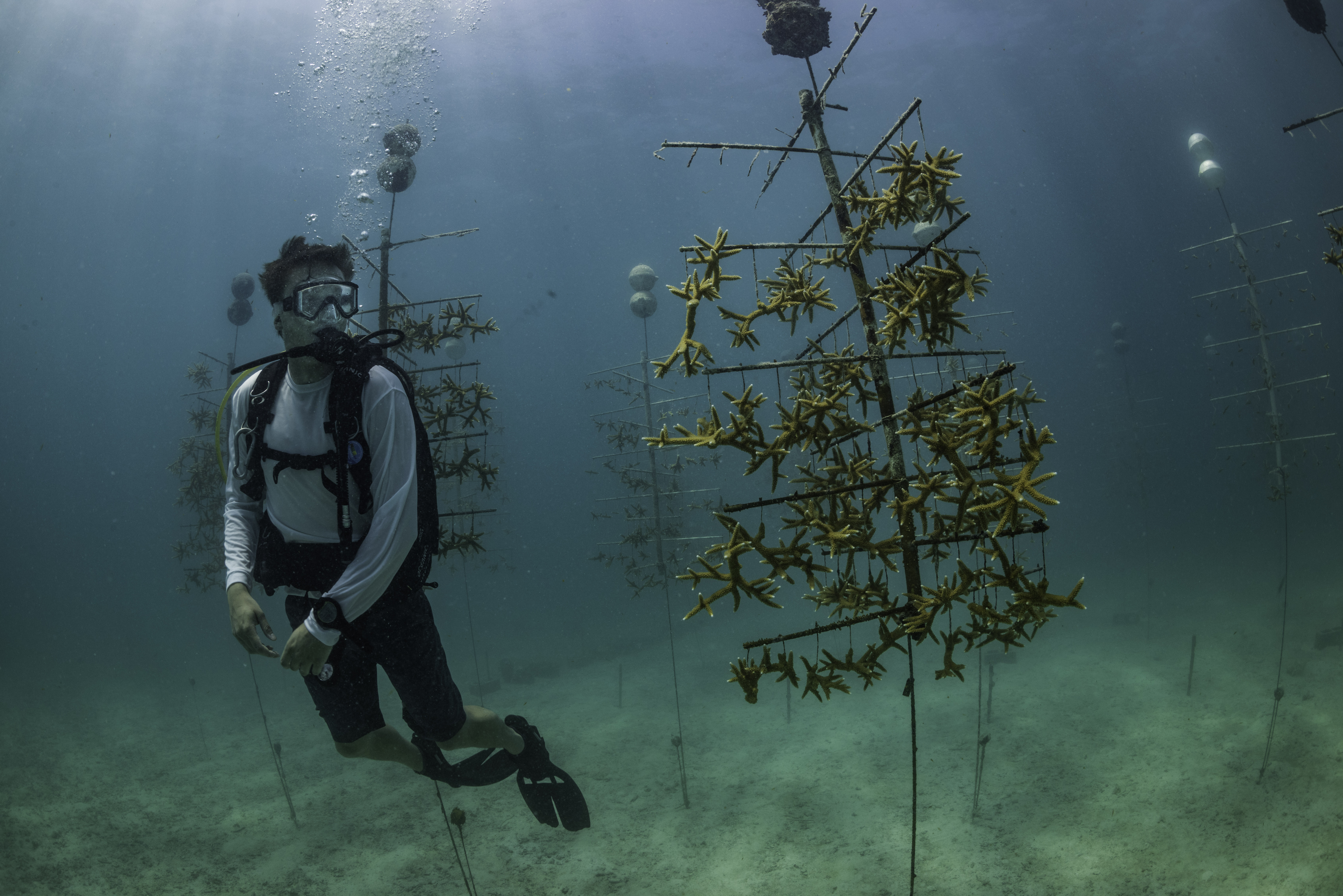 Netflix Documentary Chasing Coral Visits Mote and FAQs