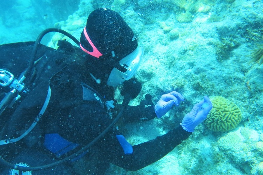 Mote's Dr. Abigail Clark samples coral tissue for the new study. Photo by: Ray Banister/Mote Marine Laboratory