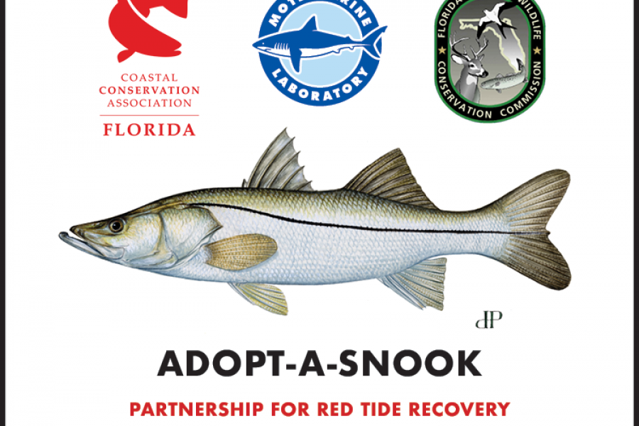 conservation organizations partner for snook recovery along