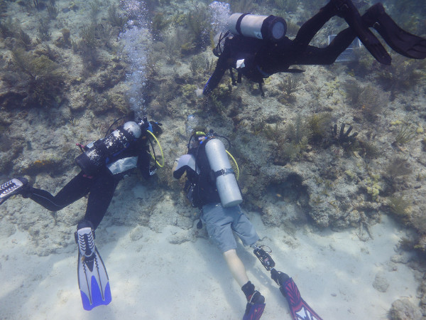 Combat Wounded Veteran Challenge members work with Mote scientists and SCUBAnauts youths to help restore a Florida Keys reef.