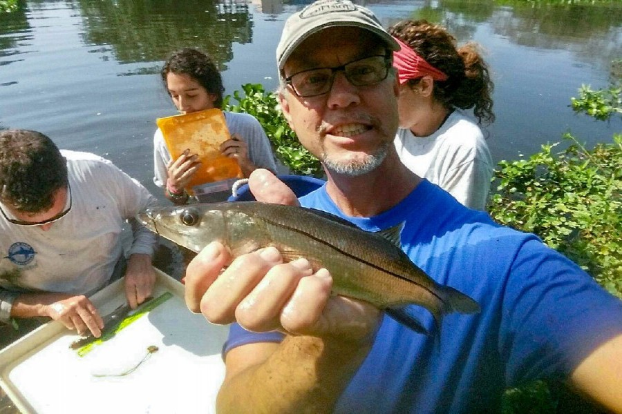 Dr. Nathan Brennan, Dr. James Locasico and Mote interns measuring snook in Sarasota canal.