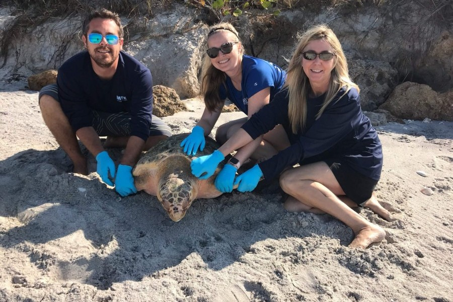 Mote animal rehabilitation staff get ready to release loggerhead Chipi into the Gulf of Mexico on March 25, 2020