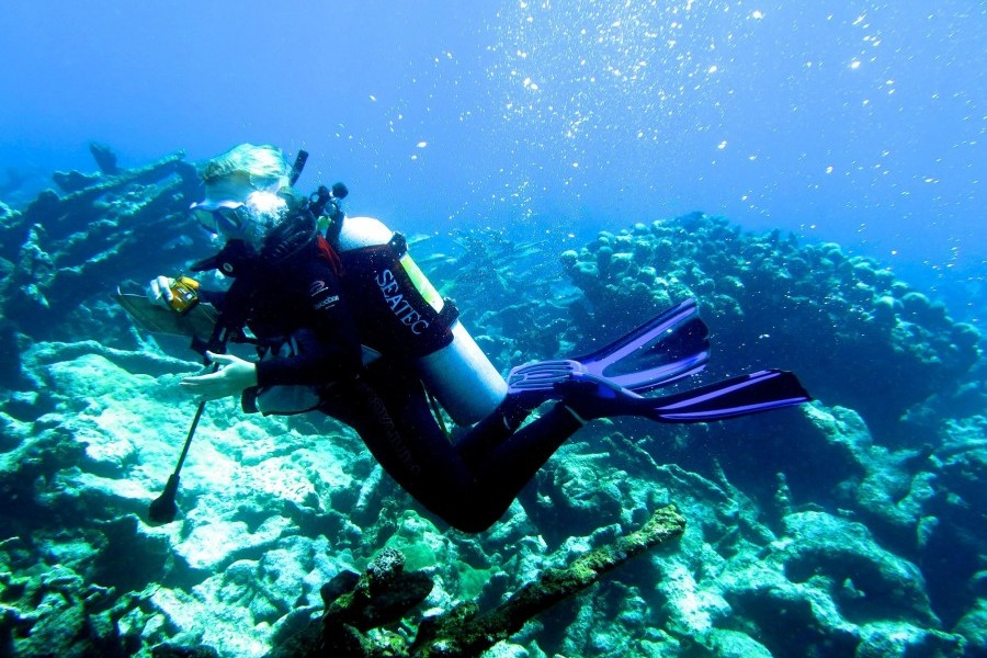 New College Student Constance Sartor scuba dives in the U.S. Virgin Islands. Credit: Constance Sartor