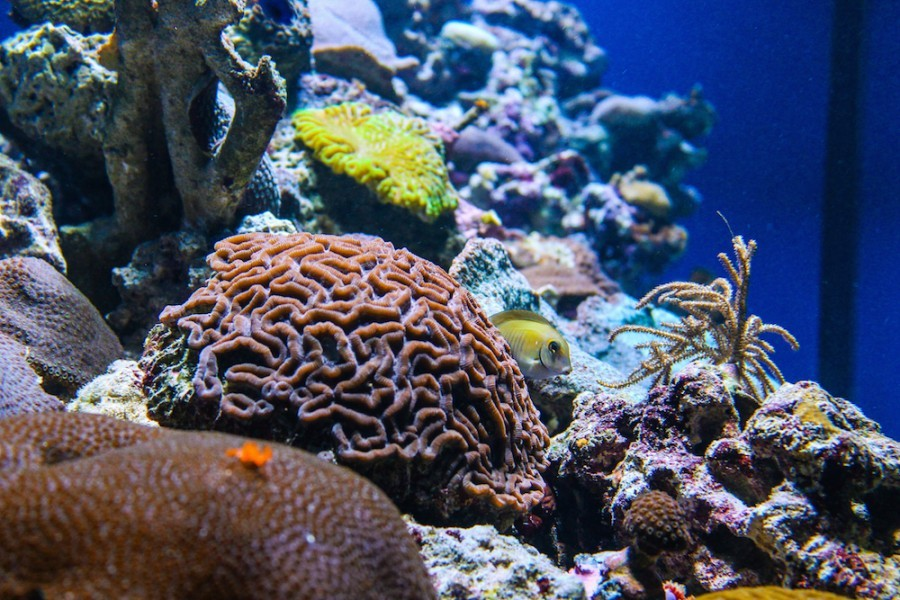 Immerse yourself in florida s coral reefs at mote aquarium for Motore acquario