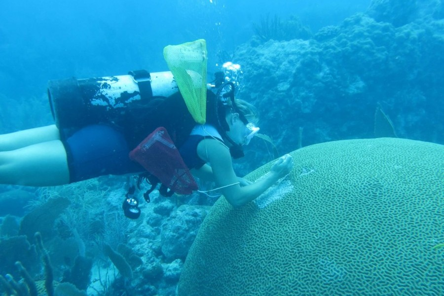 Mote's Dr. Erinn Muller studies stony coral tissue loss disease on Florida's Coral Reef. Credit: Mote Marine Laboratory