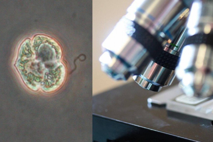 Florida red tide bloom and microscopes used in red tide research