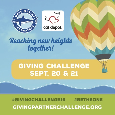Sept. 20-21: Support Mote during the 2016 Giving Challenge