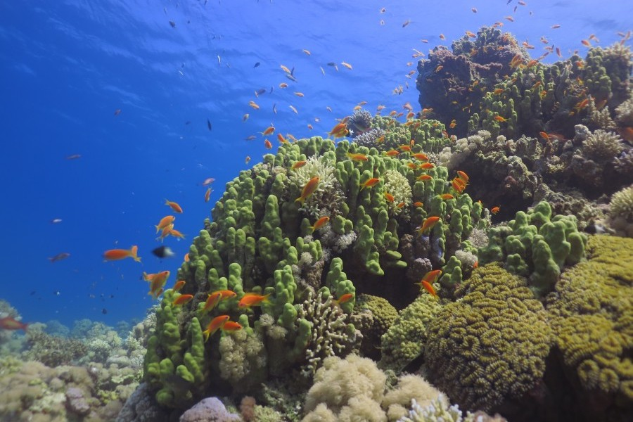 International team documents Saudi Arabia's mysterious coral reefs