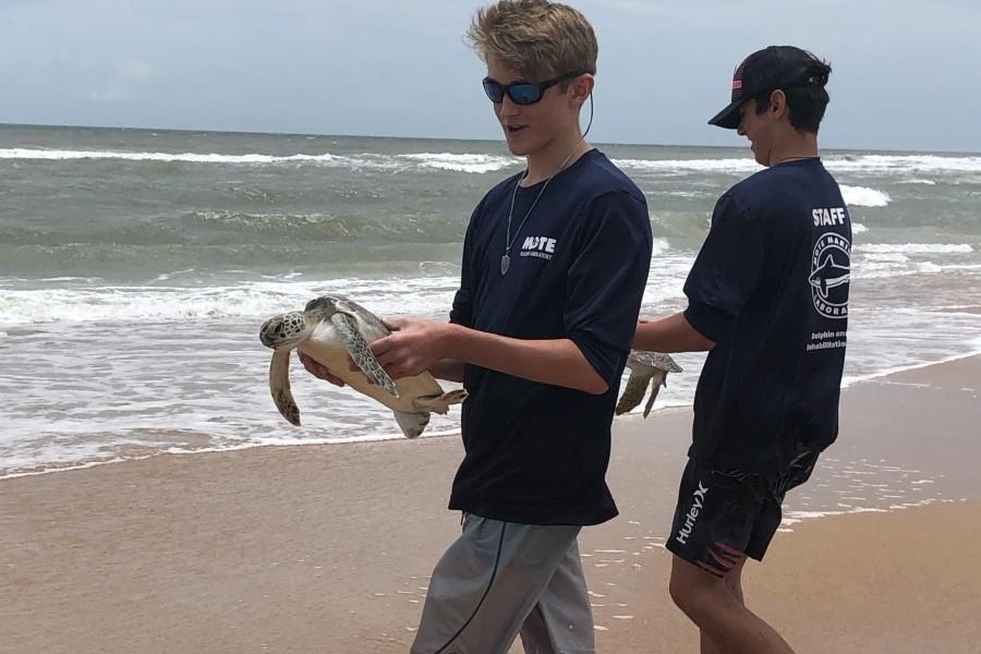 Mote's team releasing green sea turtles into the Atlantic Ocean from Flagler Beach