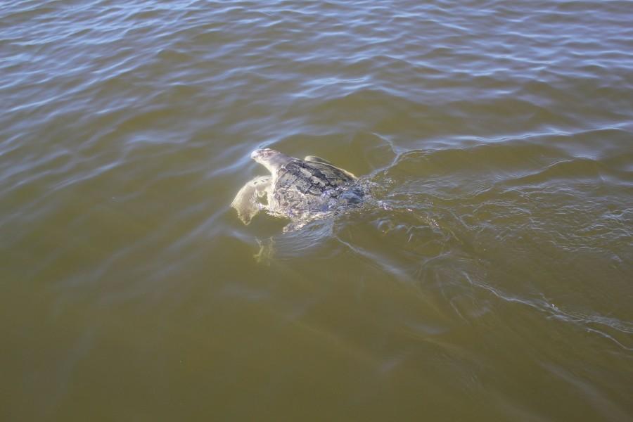 Be vigilant for marine life this summer boating season