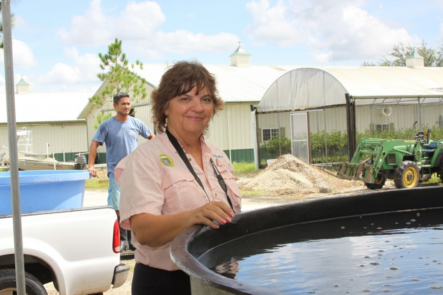 Senior Scientist and Program Manager, Dr. Kevan Main checks an aquaponics system at Mote Aquaculture Park in Sarasota.