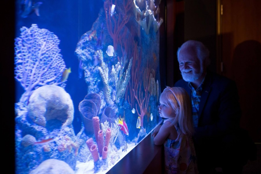 A young girl and Mote President & CEO check out a new Mote exhibit in Islamorada. Photo: Conor Goulding/Mote Marine Laboratory