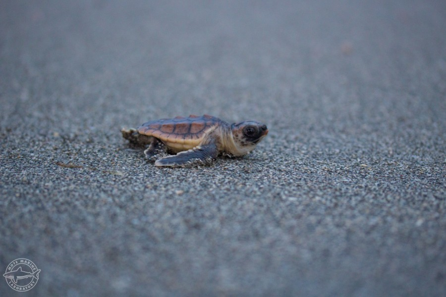 Sea turtle hatchlings are back—and so are we!