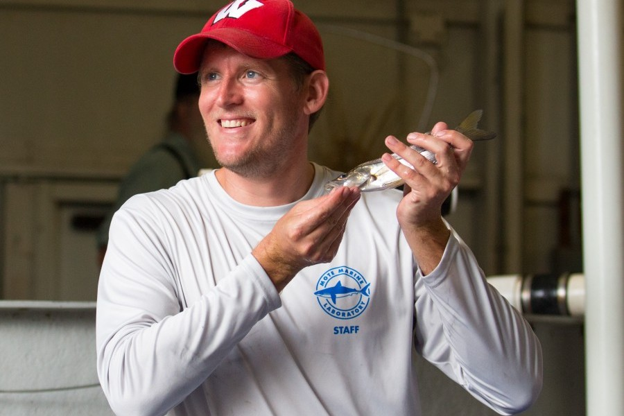 Photo: Dr. Ryan Schloesser holds a common snook. Credit: Conor Goulding/Mote Marine Laboratory