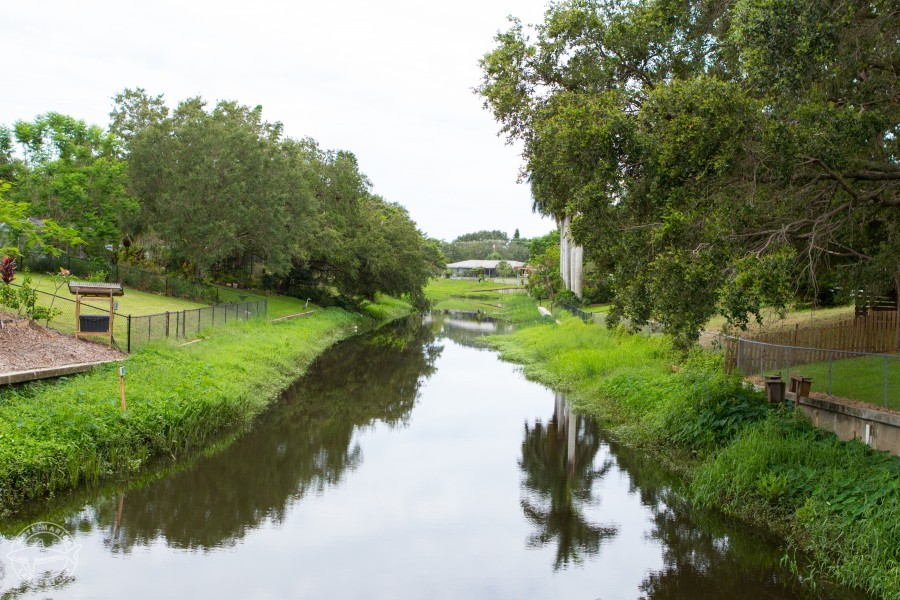 Yards along a creek system in Sarasota County, Florida. Credit Conor Goulding/Mote Marine Laboratory.