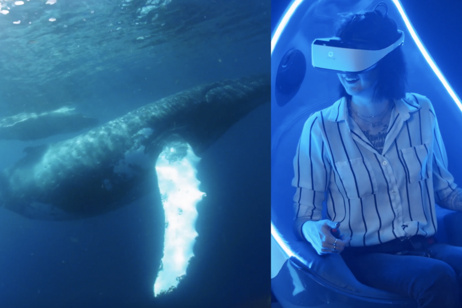 Guests can swim with humpback whales, among other experience, with new VR pods at Mote. Photo credit: Immotion