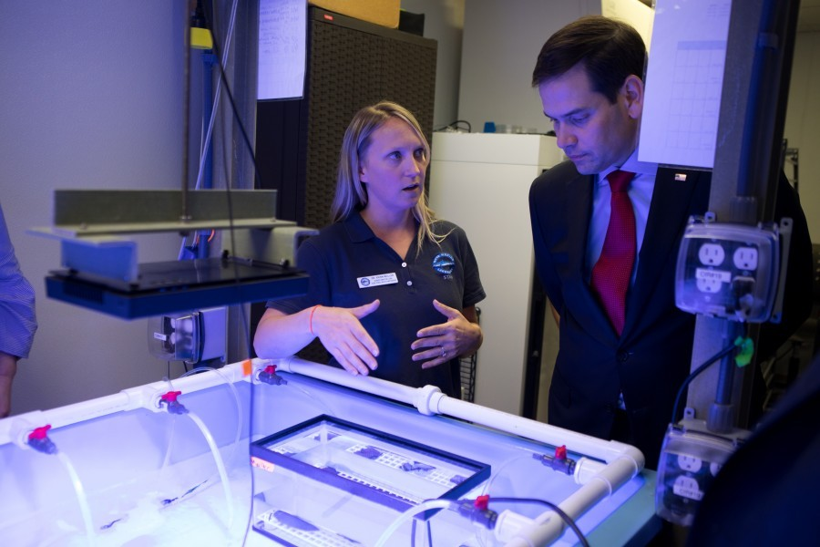 Mote scientist Dr. Erinn Muller talks with Senator Marco Rubio about coral disease on Feb. 21, 2019. Photo: Conor Goulding/Mote