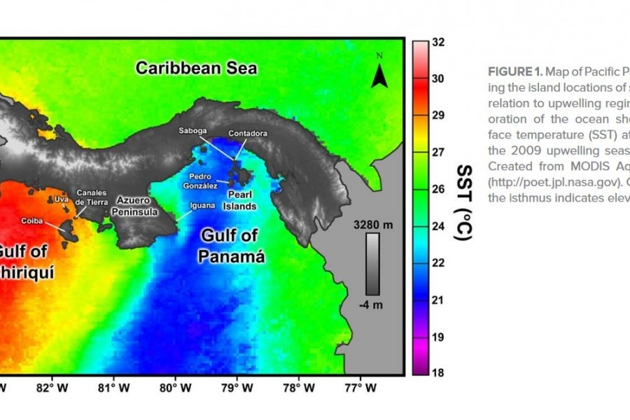 Lesson screenshot: Ocean surface temperature map showing coral reef areas studied in the lesson.