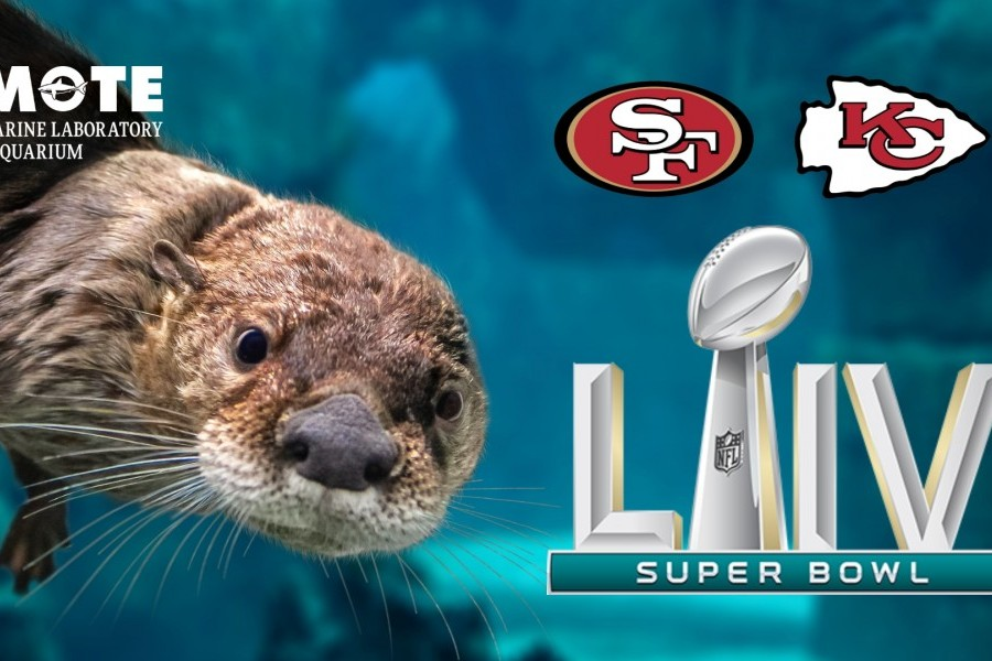 Pippi, Jane and Huck Pick Who They Think Otter Win Super Bowl LIV